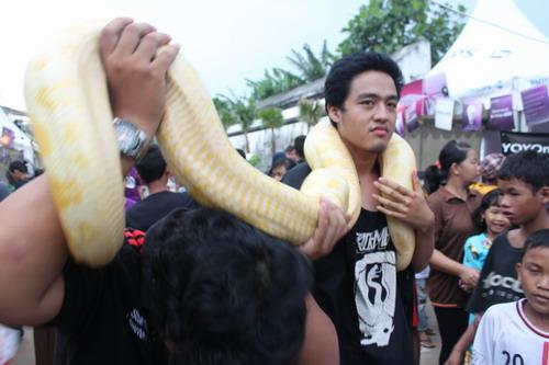 Bawa-bawa ular gede ke mana-mana