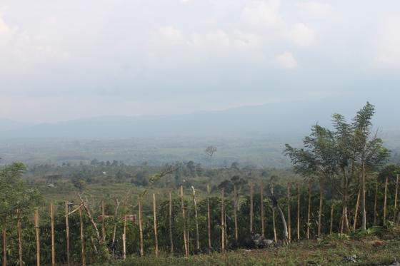 kebun strawberinya berada di daerah perbukitan. jadi dari kejauhan terlihat bukit barisan.